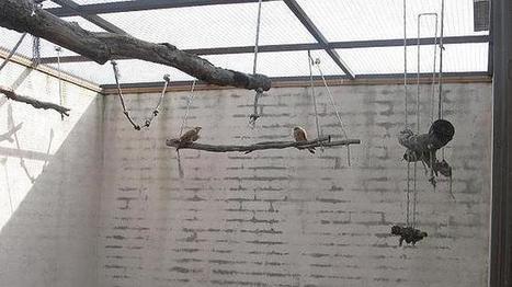 Navas del Rey recupera un ave en peligro de extinción: el cernícalo ... - ABC.es   Animales en peligro   Scoop.it