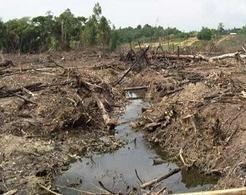 El Chocó biogeográfico: punto crítico de explotación irracional de los bosques   LA DESFORESTACION DE ARBOLES   Scoop.it