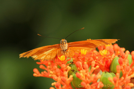 Drinking nectar | Flickr - Photo Sharing! | flowers | Scoop.it