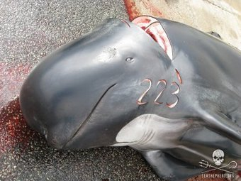 Links Between the Murderers in Taiji and the Faroe Islands - Sea Shepherd Conservation Society | Nature Animals humankind | Scoop.it