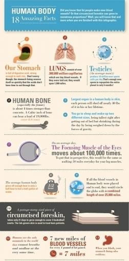 The Amazing Human Body | Ice Cool Infographics | Scoop.it