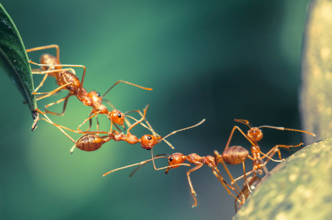 Ant Removal Services | St. Louis Pest Control | Green Energy | Scoop.it