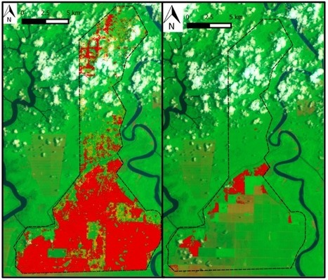 Palm oil company revs up deforestation in Malaysia | Erba Volant - Applied Plant Science | Scoop.it