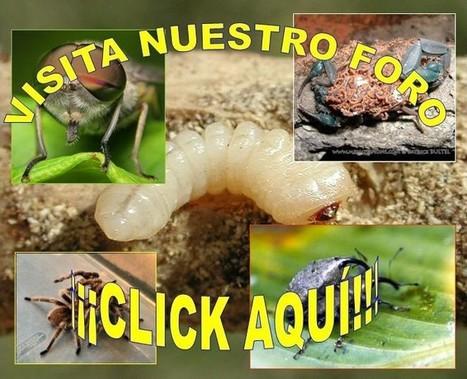 Cría Insectos: Si eres un amante de los bichos aprende a criarlos y presenciar sus interesantes comportamientos junto a nosotros. | Bichos en Clase | Scoop.it