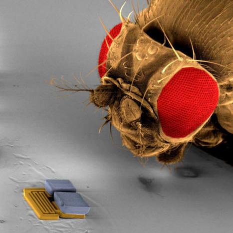 Les nanotechnologies sont-elles maîtrisables ? | Communiqu'Ethique sur les sciences et techniques disponibles pour un monde 2.0,  plus sain, plus juste, plus soutenable | Scoop.it