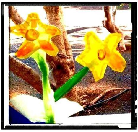 Daffodil Welcome Spring!   English Teaching News   Scoop.it