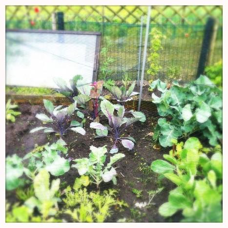 POP UP FARM visits Jair's Urban Garden | Farming The City | Vertical Farm - Food Factory | Scoop.it