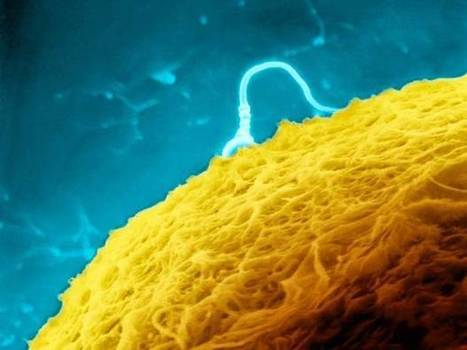 Scientists claim they have grown human sperm in the lab | Building a Web Presence | Scoop.it