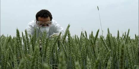 Monsanto sur le banc des accusés | Home | Scoop.it