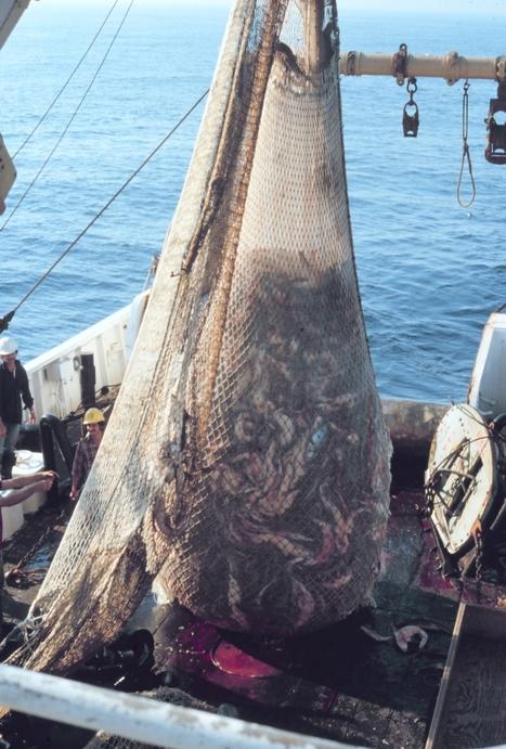 Commercial fishermen: Net ban would destroy N.C. seafood industry   Aquaculture Directory   Aquaculture Directory   Scoop.it