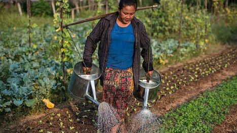 Organic Farming and Poverty: 12 Things to Know | Asian Development Bank | Development Economics | Scoop.it