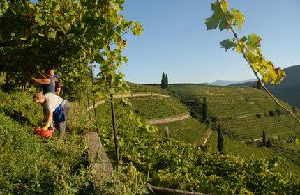 2011 Vintage Report: Italy | Vitabella Wine Daily Gossip | Scoop.it