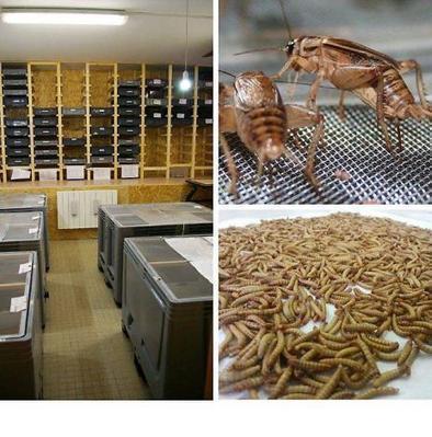 Agroalimentaire. Ils veulent inventer une farine à base d'insectes | Monde Agricole | Scoop.it