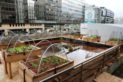 Du vert, des poules… et des écrevisses sur les toits de la RATP | Responsabilité Sociétale des Entreprises et des Organisations | Scoop.it