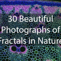 30 Beautiful Photographs of Fractals in Nature – Expanded Consciousness | Inspired | Scoop.it