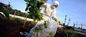 Monsanto se retira de Europa... | Organismos Genéticamente Modificados | Scoop.it