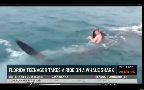WATCH: Teen Jumps On Shark's Back, Rides It Like Bronco | Xposed | Scoop.it