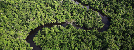 Amazon | Places | WWF | Rainforests - Global environments | Scoop.it