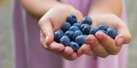 7 Things You Probably Didn't Know About Blueberries | Troy West's Radio Show Prep | Scoop.it