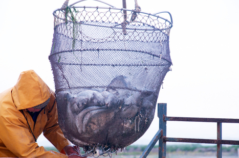 Better design, better targeting needed for sustainable development of aquaculture | Effective Biological treatment | Scoop.it
