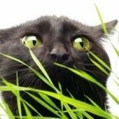 Les vers du chat | CaniCatNews-santé | Scoop.it
