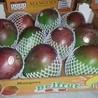 Mangoseizoen in Peru