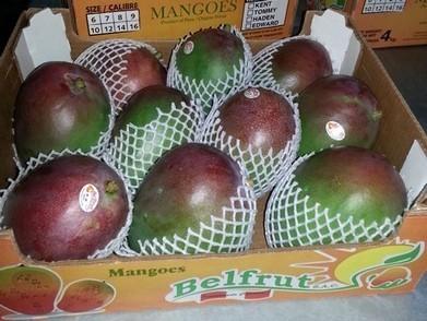Peru: Luchtvracht mango's onlogisch | Mangoseizoen in Peru | Scoop.it
