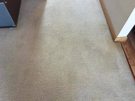 Newcastle Carpet and Tile Cleaning   Newcastle Carpet and Tile Cleaning   Scoop.it
