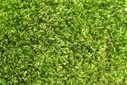 MIT Researchers Find a Way To Make Solar Panels from Grass Clippings | Sustainable Futures | Scoop.it