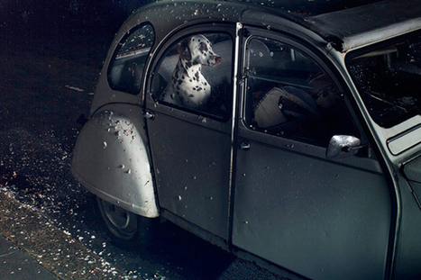 Juxtapoz Magazine - The Silence of Dogs in Cars | ART  | Conceptual Photography & Fine Art | Scoop.it