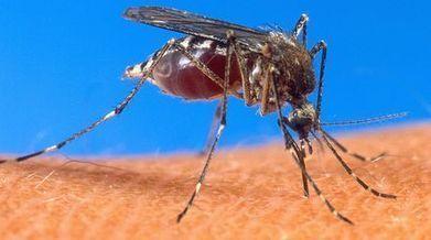 Comienza en Brasil venta de vacuna contra el dengue | Salud Publica | Scoop.it