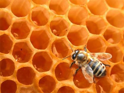 La miel con residuos de OGM debe someterse a autorización | Health sciences and law | Scoop.it