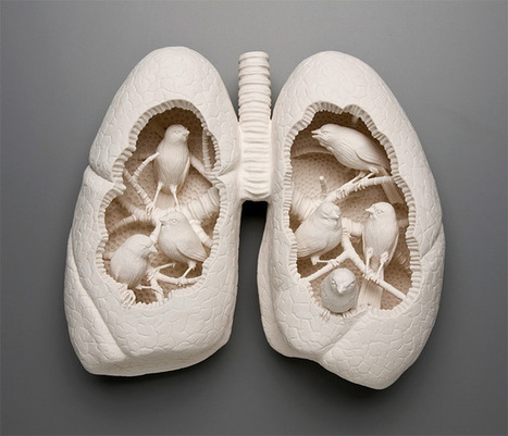 The #Porcelain #Sculptures of Kate McDowell #organs #nature | Luby Art | Scoop.it