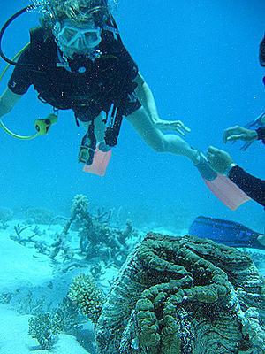 Great Barrier Reef Marine Park Fun! | Environment | Scoop.it