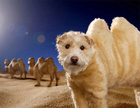 Photography Inspiration - Doggie Holiday Cards | Smartpress.com | Photography, Graphic Design & Artful Inspiration | Scoop.it