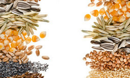Canada Focuses on Food Security With Seed Diversity Initiative   Justice, Peace and the Integrity of Creation   Scoop.it