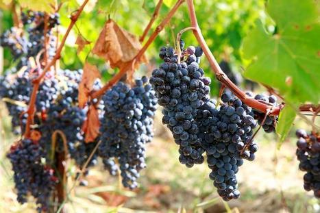 2011, un millésime prometteur   vin   Scoop.it