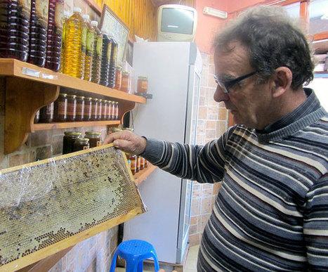The Sweet Science of Making Greek Honey   Greek tastes   Scoop.it