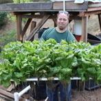 Jon Parr and Vlad Jovanovic - Aquaponic Gardening | Wellington Aquaponics | Scoop.it