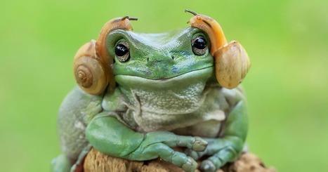 #Photographie : Ce photographe réalise des clichés de grenouilles qui ne ressemblent en rien à ce que vous avez déjà vu. | Photographie, d'ailleurs! | Scoop.it