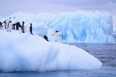 CVS is putting our entire Antarctic marine ecosystem at risk | All about water, the oceans, environmental issues | Scoop.it