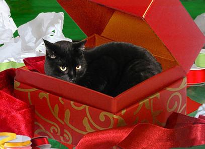 Cat Christmas Cards, Black Cat In A Box | Deborah Julian Art | Christmas Cat Ornaments and Cards | Scoop.it