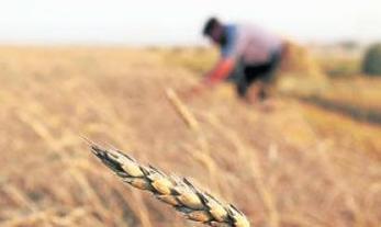 Sequía del sur andino ecuatoriano causa la pérdida de la producción del maíz | Un poco del mundo para Colombia | Scoop.it