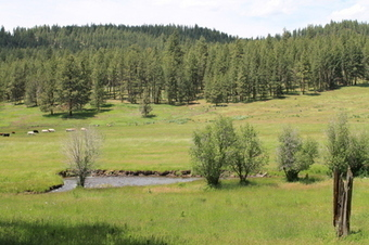 18,000 Oregon Acres Going to Auction | Timberland Investment | Scoop.it