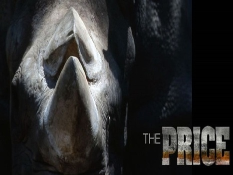 Boulder filmmaker exposes rhino poaching and the underground rhino horn trade | Save our Rhino and all animals...this is what it looks like!!!!! | Scoop.it