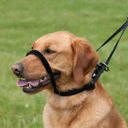 How to Choose a Dog Training Collar - Dogs 101   Diet Today Tips   Scoop.it