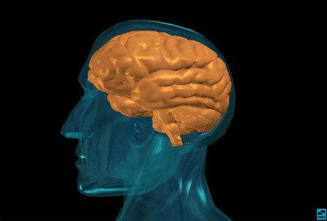 Memory Definition & Types of Memory - LiveScience.com | SHS GCSE Psychology | Scoop.it