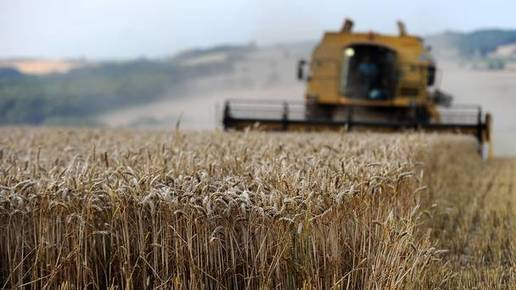 Search under way to find wild varieties of common crops to secure food supplies