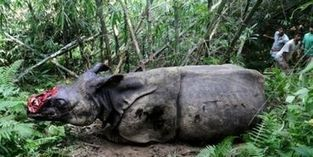 Stop the Rhino Killers ! PLEASE SIGN ! ! - Care2 News Network | Rhino Poaching South Africa  & Accross the Globe | Scoop.it