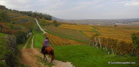 A cheval dans le vignoble alsacien | Carnet d'escapades | Scoop.it